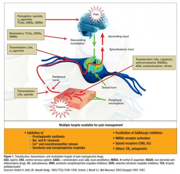steroid induced brain atrophy