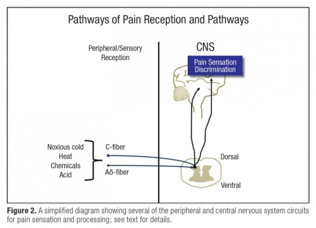 pathways of pain