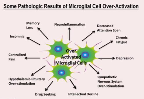 MicroGlialCellActivation