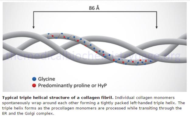 collagen fibrils