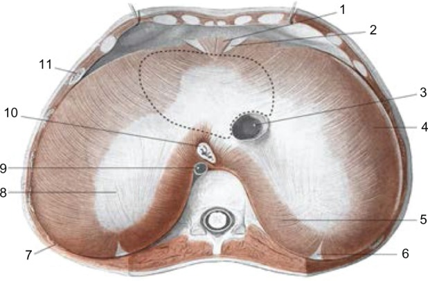diaphragm-fig1